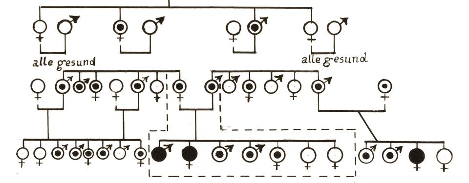 Bilden är en ritning av ett släktträd som visar hur en ärftlig sjukdom följer genom flera generationer. Den utgår ifrån ett par där en har en ärftlig sjukdom, efter fyra generationer har det blivit ännu fler.