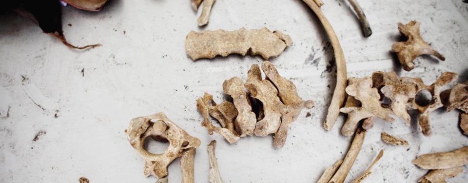 Bilden visar skelettdelar.